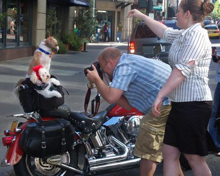 dogphotos.jpg