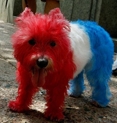 American_Dog.JPG