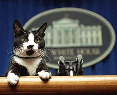 scaled.obamcat.jpg