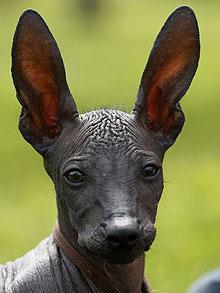 ears-220_1111550f.jpg