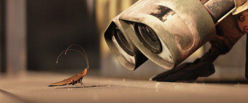 wallecockroach.jpg