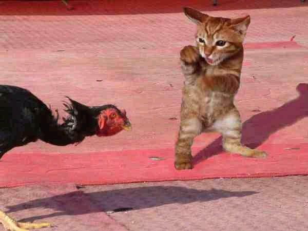 cat-turkey-smackdown.jpg