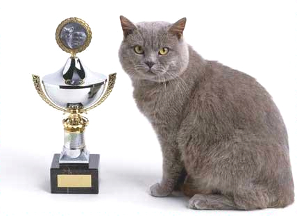 Professor Whiskers celebrates after winning the trophy for Outstanding Achievement in World Music.