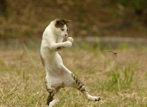 dancing_cat.jpg