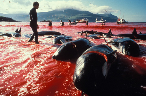 whalingIceland.jpg