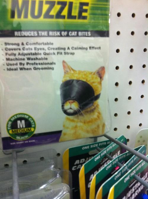 cat-muzzle-14869-1291591208-16.jpg