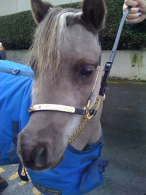 grey_pony.jpg