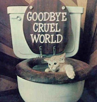 Cat_Toilet1.jpg