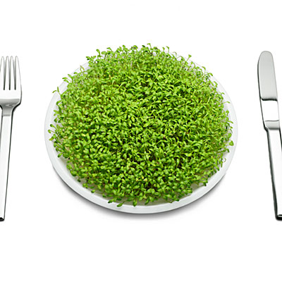 smackdown-seattle-portland-smug-vegan-plate-0711-l.jpg