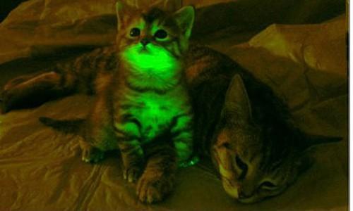 glow-cat-007.jpg