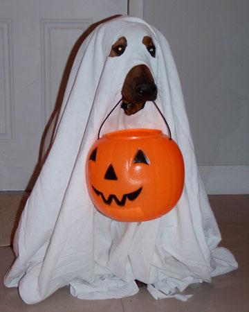 Ghost (Via)