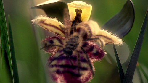 Digitally make some bee shaped orchids and then some digital bees to bee dance on the orchids